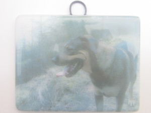 Photo of your pet in glass